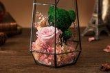 Flor natural real de Rose de la manera en el vidrio para el regalo de cumpleaños