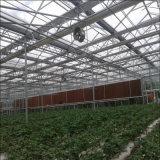Multi estufa da folha do PC da extensão para o crescimento de Agricutural