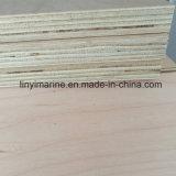 단풍나무 합판 포플라 코어 가구 급료 합판 18mm