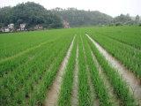 Plantador quente do arroz da venda do Acme para o Transplanter Filipinas do arroz