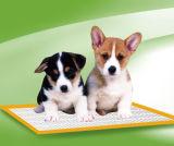 Garnitures de formation d'animal familier