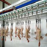 Strumentazione di macellazione dell'anatra e del pollo