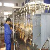Machine d'abattage de volaille pour la maison d'élevage de volaille