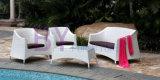 sofá impermeável do Rattan do balcão do hotel da estrela by-431 cinco