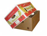 Contenitore di carta piegante tagliato di frutta dell'alimento