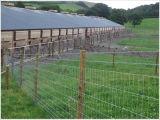 Rete fissa galvanizzata durevole del giacimento della rete fissa dell'azienda agricola del TUFFO caldo