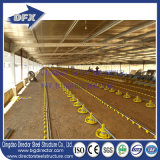 Moldura de aço Broiler Poultry Farm Construction Shed Layout