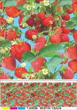 El PVC colorido imprimió el mantel transparente con el diseño de la fruta para el hogar/el partido/al aire libre