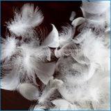 Pena branca lavada do ganso usada enchendo-se