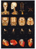 Film médical d'ultrason pour le film d'ultrason d'hôpital