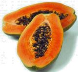 Máquinas de produção de sumo de papaia / mamão de papaia SUS 304