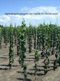 Estaca de grande resistência FRP Rod das plantas da estaca da fibra de vidro