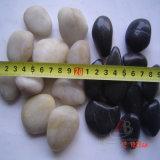 Seixos Polished naturais para séries do jardim no diâmetro 2-3cm