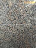 Telha do granito de Caledonia para a bancada/parte superior da vaidade/parte superior do banco/telha do revestimento/parede