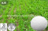 Extrait naturel de chicorée de qualité : Inuline 90% (numéro de CAS : 9005-80-5)