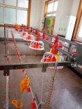 Maquinaria modificada para requisitos particulares de la avicultura con la construcción de la casa en buena calidad