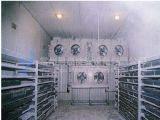 Cella frigorifera fredda di Storage Freezer (stanza di /freezer/cold della stanza di raffreddamento)