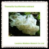 Extracto Polysaccharidem, polvo de Fuciformis del Tremella de la alta calidad de Fuciformis del Tremella