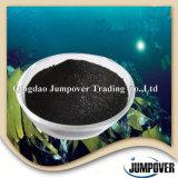 Polvere nera solubile in acqua dell'estratto dell'alga di 100%