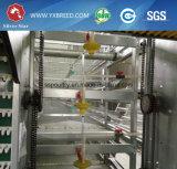 Le poulet d'aviculture mettent en cage pour la grande ferme