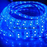 Cer RoHS 12V 60LED/M 5050 blaue flexible LED Streifen-Lampe