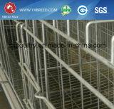 Neue Produkte ein Typ Huhn-Batterie für Schicht-heißen Verkauf in Nigeria (A4L120)