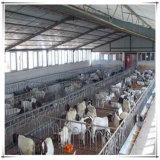 高品質の電流を通された鋼鉄牛小屋の農家牛家