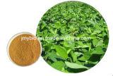 Anti-Inflammatory 10%~98% Chlorogenic Zuur/Uittreksel van Eucommia Ulmoides/Chlorogenic Zure In water oplosbaar