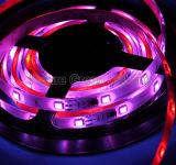 Luce di striscia di RGB LED con CI per al il genere superiore 130 di cambiamento di colore