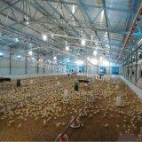 Дома цыпленка стальной структуры Breeding для сбывания