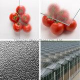 유리제 온실 지붕을%s 4mm 중앙 연무에 의하여 단단하게 하는 유리