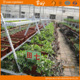 Planting Vegetables를 위한 높은 Quality Film Roof Glass Wall Greenhouse