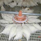 Équipement de volaille de ferme de poulet dans le bétail de volaille