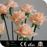 Flores claras do diodo emissor de luz Rosa para a decoração Home
