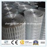 Migliori prodotti di vendita rete metallica saldata/galvanizzata dell'Europa