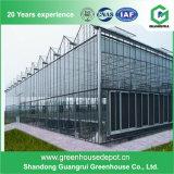 Heißes verkaufendes grünes Haus-abgedecktes Glas-Gemüseglasgewächshaus
