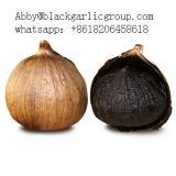 Чеснок черноты шарика добавки свободно