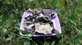 Weiß-rückseitiger schwarzer Pilz mit ISO