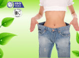 Hochwertiges Testosteron CAS 58-22-0 Fabrik-Zubehör-pharmazeutische Chemikalie