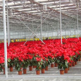 35 лет парника гарантии рентабельного стеклянного для цветков