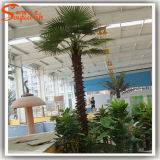 Indoor Decoration를 위한 인공적인 Palm Tree