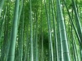 Het Poeder van het Uittreksel van het Blad van het bamboe