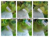 세륨, ISO (3 에 8mm)를 가진 명확한 Patterned Glass