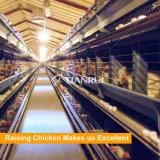 Cage automatique de couche de poulet à vendre