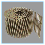 Chiodo Twisted comune galvanizzato dorato della bobina della tibia di vendite calde
