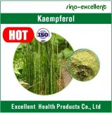Extrato natural de 100% Kaempferia Galanga