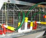 De hete Verkopende Apparatuur van de Kooien van de Kip van de Jonge kip van het Landbouwbedrijf van het Gevogelte (een Frame van het Type)