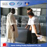 Cage automatique d'oeufs de couche de poulet pour la ferme avicole à vendre