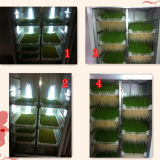 씨 Growing Machine 또는 Barley Hydroponic Machine/+8615621096735