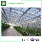 Invernadero caliente de la película de la exportación de China para el cultivo de la agricultura